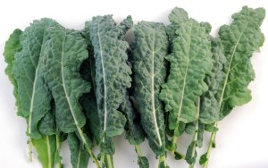 Here's a close up of Lacinato Kale
